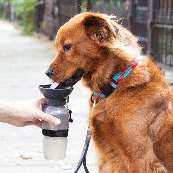 Бутылка-поильник для собак