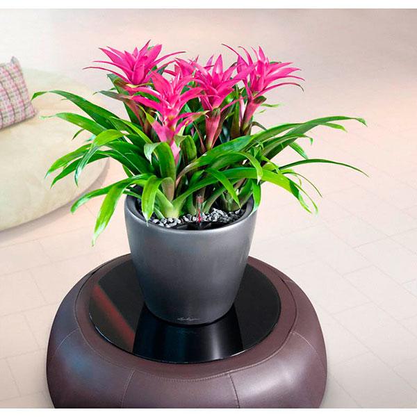 Неприхотливое и красивое комнатное растение