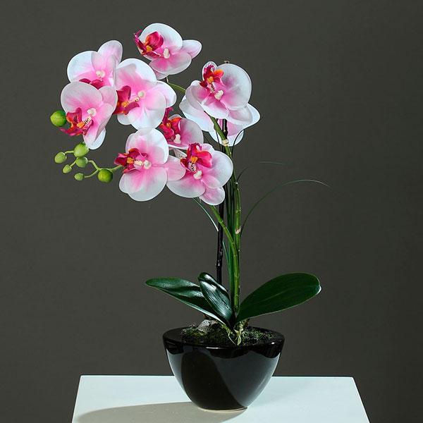 Красивое живое растение