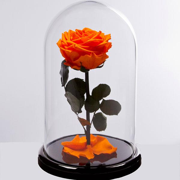 Вечная роза в колбе