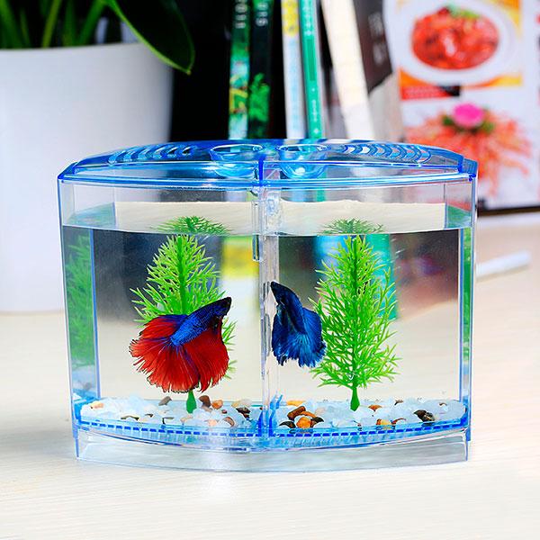 милый аквариум с красочными рыбками