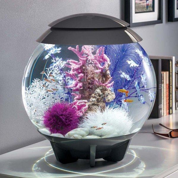 Небольшой аквариум – оригинальный подарок и стильный аксессуар