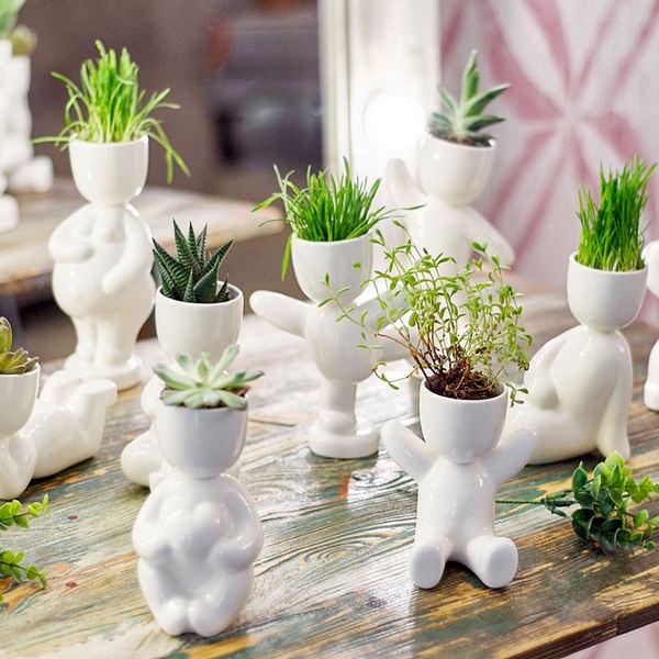 Растения в горшках для одногруппниц на 8 марта